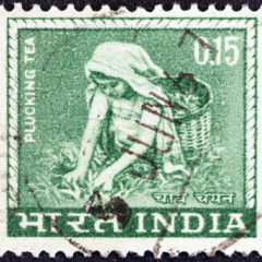 Woman plucking tea in India stamp